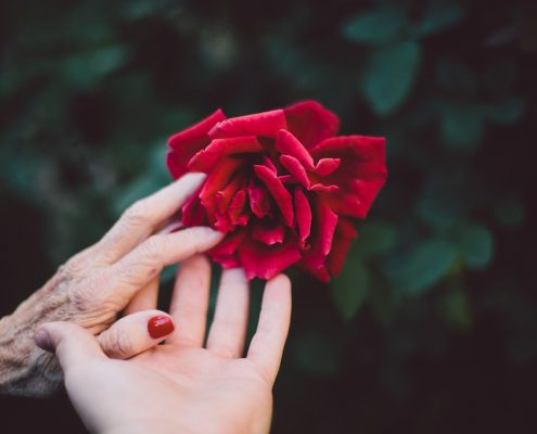 can dementia be prevented, two people's hands holding red rose